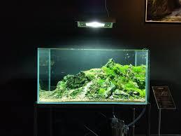 Okeanos Aquascaping 168 Best Aquascaping Images On Pinterest Aquarium Ideas