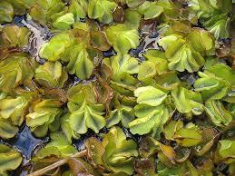 native plants to new zealand imapinvasivesnetwork