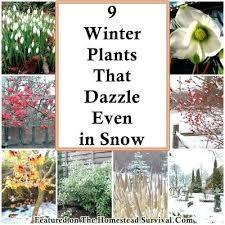 Winter Gardening Ideas Winter Gardening Ideas Garden Ideas Images Winter Gardening Club