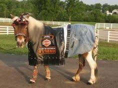 Halloween Costumes Horse 10 Amazing Horse Rider Costume Ideas Cowgirl