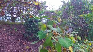 agroforestry finca la fe