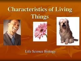 Characteristics Of Living Things Worksheet Middle Characteristics Of Living Things