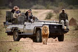 african safari car african safari game drive kapama activities