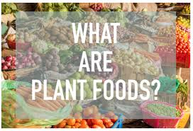 what is a plant based diet the difference between