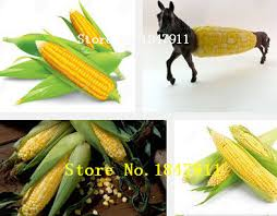 compare prices on ornamental corn shopping buy low price