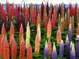 chelsea flower show london via surrey