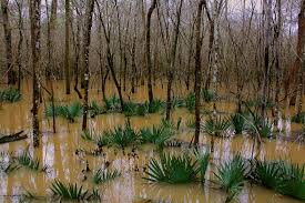 South Carolina national parks images Congaree national park south carolina for the love of wanderlust jpg