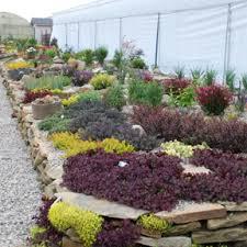 Rock Garden Cground Completed Sunsparkler Sedum Rock Garden Ground Cover
