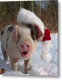 christmas pig christmas pig photograph by howell