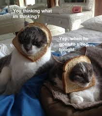 Cat Breading Meme - image 560980 cat breading know your meme