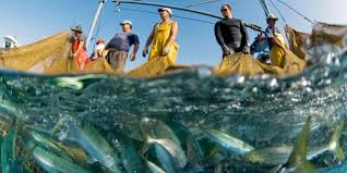 bbc future how the world u0027s oceans could be running out of fish