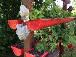 rain gutter for growing strawberries raingutterplanters planters