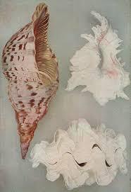 seashell wiktionary