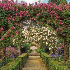 Metal Arches And Pergolas by Mottisfont Abbey Rose Garden Pixdaus