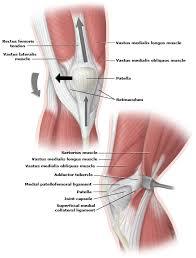 Lateral Patellar Ligament Medial Patella Anatomy Jpg Title U003dmedial Patella Anatomy