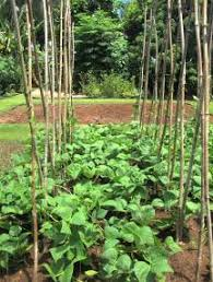Vegetable Garden Preparation by Preparing And Planting A Vegetable Garden Horticulture Unlimited