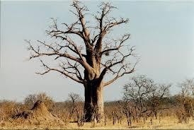 my home tree