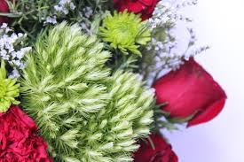 eat sleep make a christmas y rosemary tree floral arrangement diy