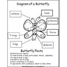 86 best butterfly images on pinterest butterfly life cycle life