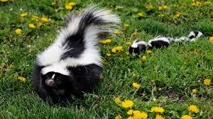 skunk repellent the tree center