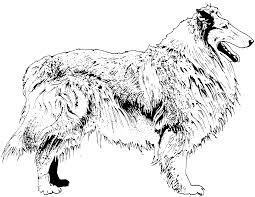 free border collie coloring pages murderthestout