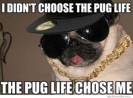 Sad Pug Meme - go here if you are sad page 5 why we protest anonymous
