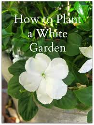 garden a collection of gardening ideas to try gardening