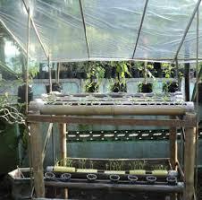 cara membuat cairan hidroponik cara membuat kit hidroponik dari pipa batang bambu daun ijo