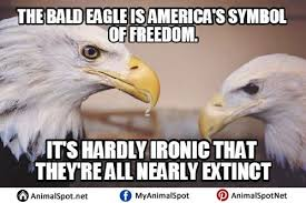 Freedom Eagle Meme - bald eagle meme freedom eagle best of the funny meme
