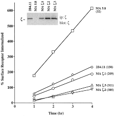 what is 138 311 as a percent regulation of constitutive tcr internalization by the ζ chain