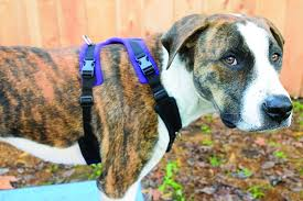Four Paws Comfort Control Harness The 2017 Best Dog Harnesses Review Whole Dog Journal