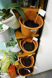 singapore hdb vertical vegetable garden philosophy in the bedroom