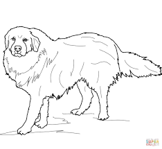 great pyrenees coloring page free printable coloring pages