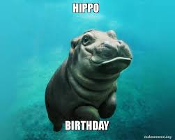 Hippo Memes - hippo birthday make a meme