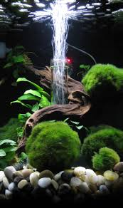 best 10 biorb fish tank ideas on pinterest fish tank fish