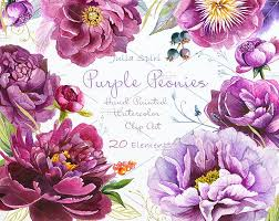 Peonies Flower Purple Peonies Watercolor Clipart Illustrations Creative Market