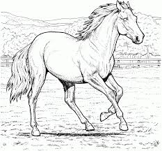 real horse coloring pages aecost net aecost net