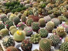 diy cactus terrarium a crafty habit