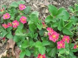 top 10 ornamentals to grow in your vegetable garden veggie gardener