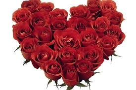 how much does a dozen roses cost how much does a dozen roses cost and what s the meaning