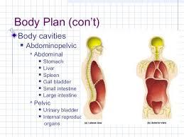 Human Anatomy Terminology A U0026 P Lecture 1 082310 Intro Descriptive Anatomy Anatomical Term U2026