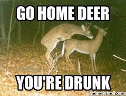 Funny Deer Memes - best funny deer memes deer meme memes kayak wallpaper