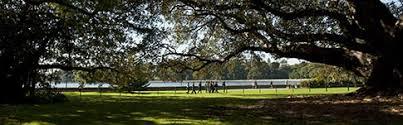 Botanical Garden Sydney by Parks In Sydney Best Parks U0026 Gardens In Sydney Picnic Walks