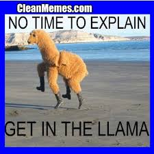 Memes Clean - get in the llama clean memes the best the most online
