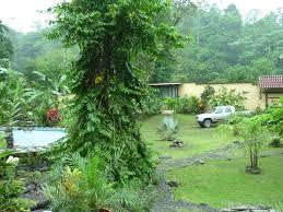 Holzhaus Mit Grundst K Kaufen Haus Mit Regenwald In Costa Rica Kaufen
