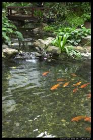 beautiful fish pond at your house garden ponds fish homegarden