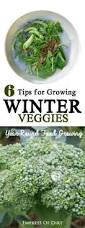 collection year round gardening in cold climates photos best