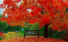 bench leaf trees autumn color beautiful views wallpapers