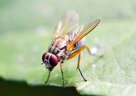 get rid of fruit flies once and for all housewife plus