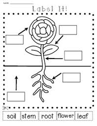 science plants and seeds lets label it cut and paste